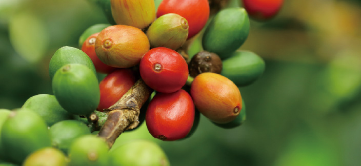 デパコスなどにも使用されるコーヒー種子エキスは愛用者も多い